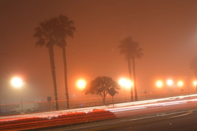 Foggy night in Cali... EyeEmBestPics Sandiego The Purist (no Edit, No Filter) Long Exposure Beautiful Palm Trees Nature