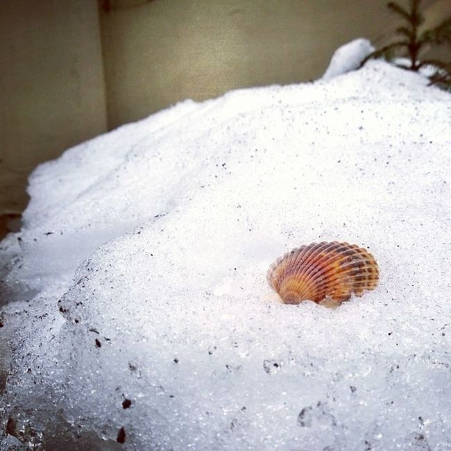 A seashell in the snow in Upper West Side... Such a marvelously quirky sight! ^_^ CreateYourOwnBeach Thingsisee IHeartNYC