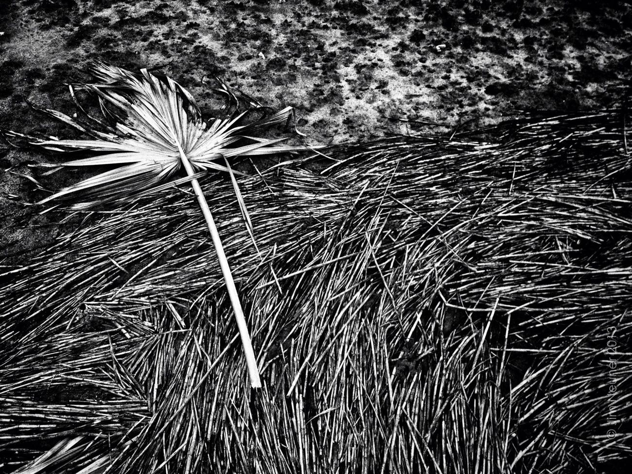 frond and reeds