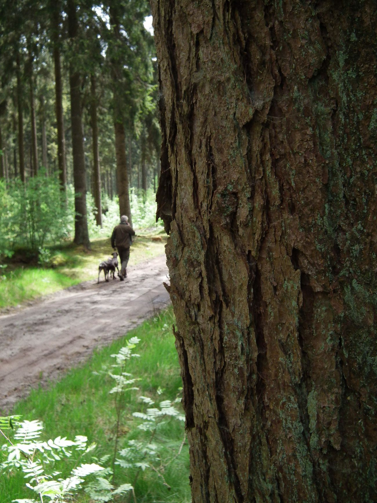 Husband and dogs... Tree Outdoors Forrest Walking Dsk Gsp Huntingdog Birddog Peaceful Silence Nature Nature Photography Holland
