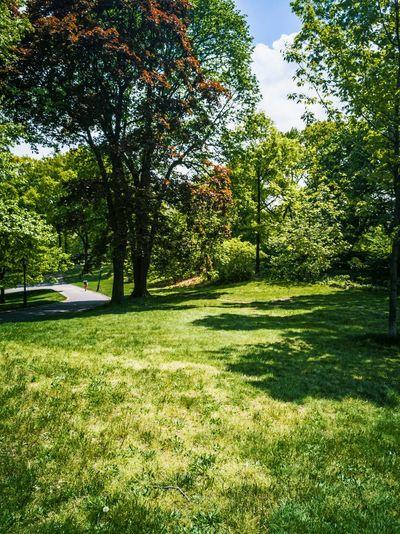 Windows XP Style lol RahimNoel Rahim First Eyeem Photo Central Park - NYC Vivid ❤ NY New York NYC Beautiful Random Green