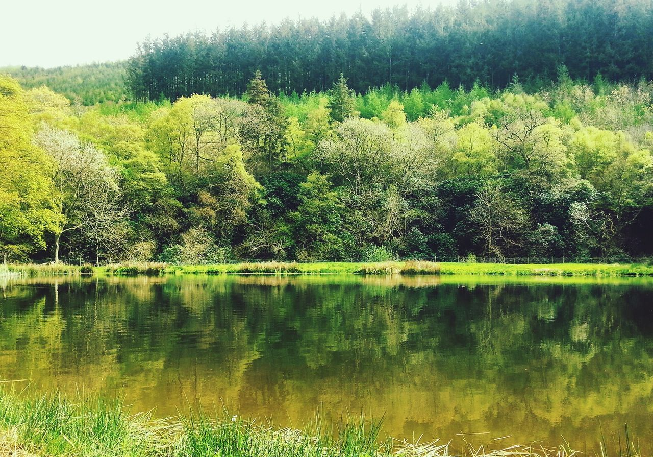 Scenic shot of reflection of trees in lake