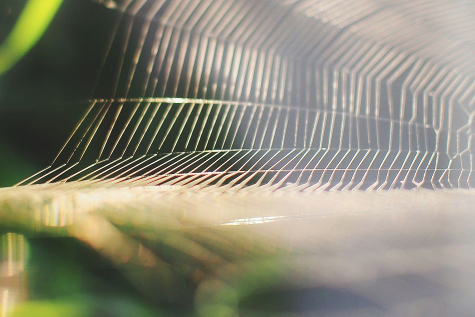 Close-up Selective Focus Fragility Focus On Foreground In A Row Nature Softness Green Color Beauty In Nature No People Outdoors Macro Nature Photography EyeEm Nature Lover Spiderweb Tranquility Beauty In Nature Morning Nature