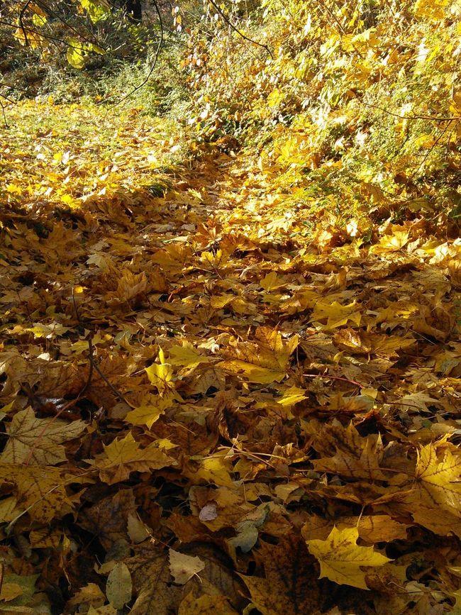 Naturephotography Enjoying The Sun Forrest Trees Autumn🍁🍁🍁 Autumn