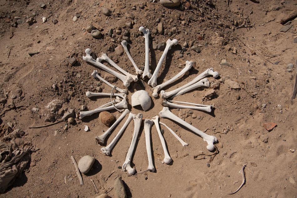 Beautiful stock photos of death, Abundance, Animal Bone, Animal Themes, Bone