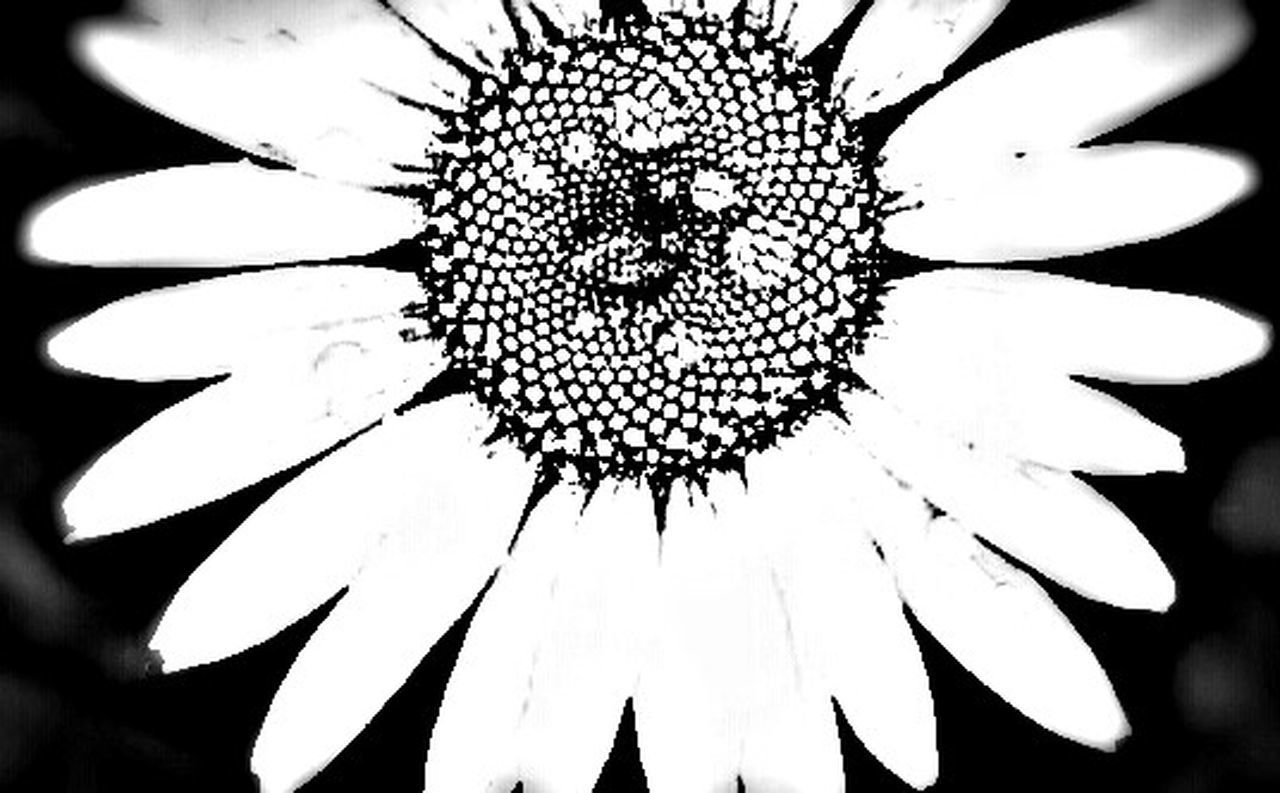 ...the daisy...Macro Beauty Flower Porn Daisy💜 Flowerpower Beautiful World Sony Xperia Eyeemphotography Beautiful Black & White EyeEm Best Shots - Black + White Black And White Photography Monochrome Intricate Nature Intricatedesignofnature Intricate Daisylove