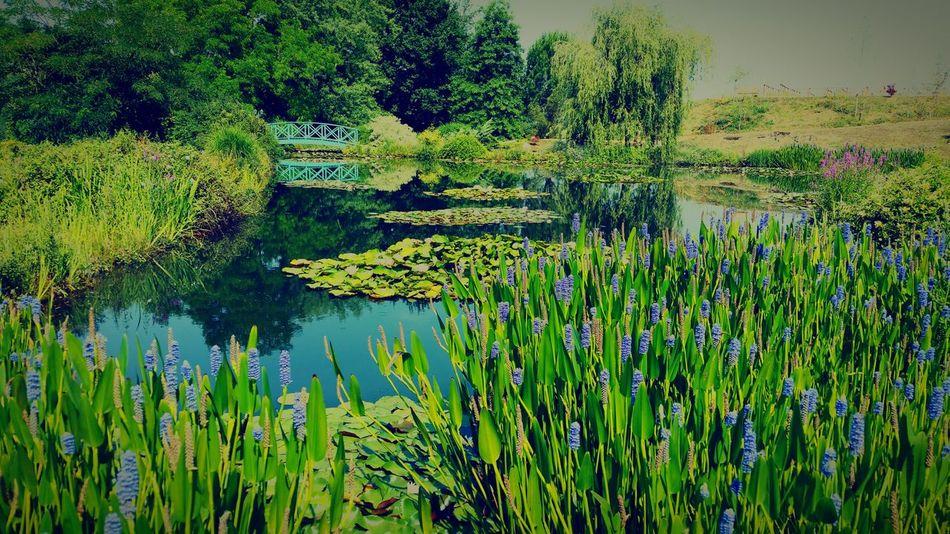 Jardin d'eau Carsac France Garden