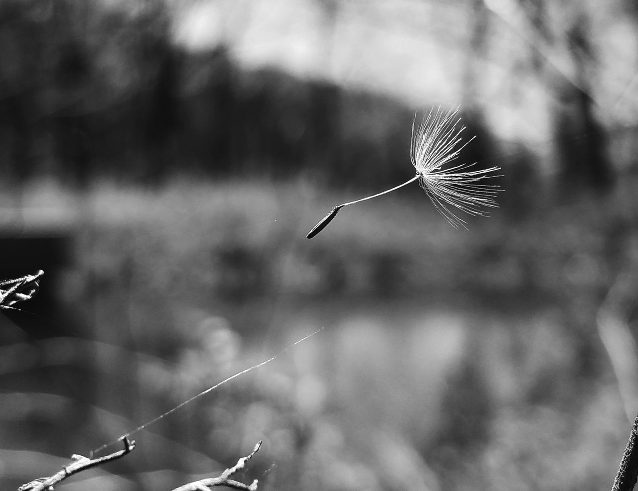 Carelessly free Mid-air Nature Flying Close-up Fragility Outdoors EyeEm EyeEm Best Shots Android Photography Plant Bokeh Black And White Samsung Galaxy S7 Edge Dandelion Close-up