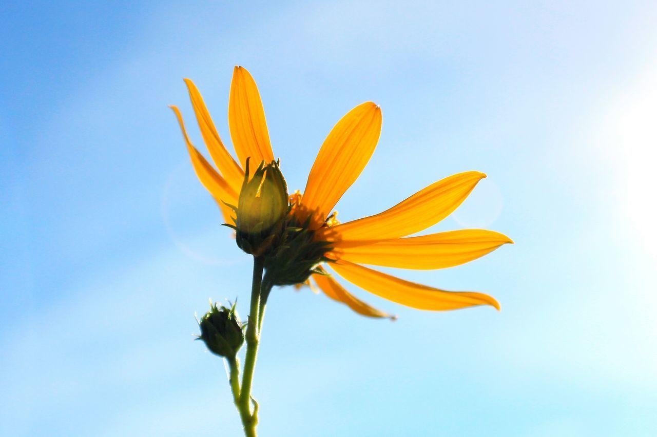 Flowers Sky Sunlight