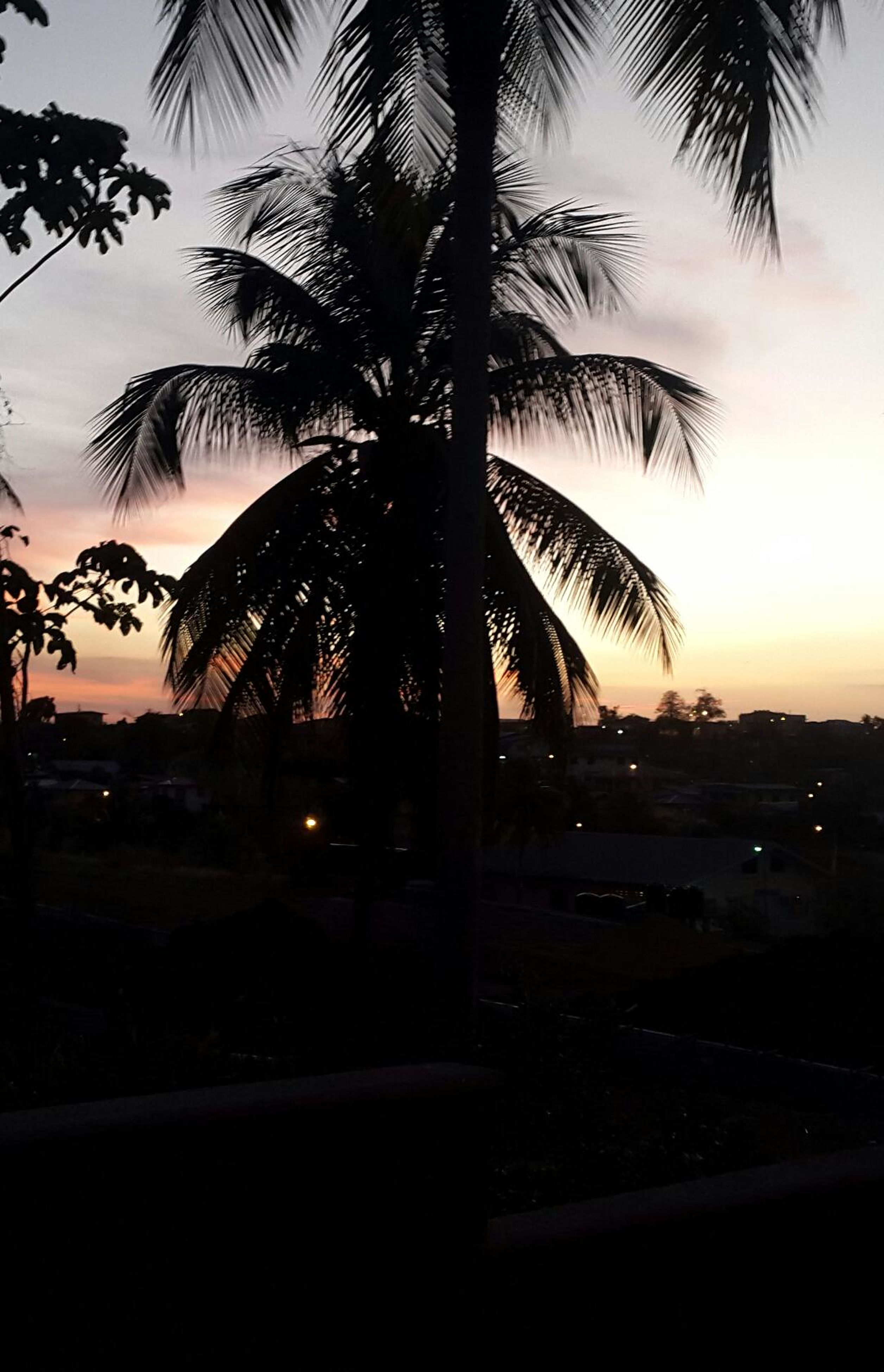 palm tree, silhouette, tree, sunset, sky, tranquility, scenics, nature, tranquil scene, sea, beauty in nature, built structure, growth, dusk, building exterior, outdoors, beach, architecture, water, no people