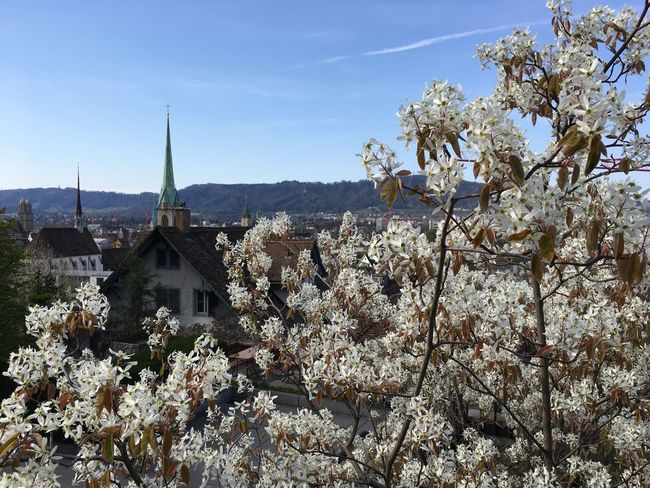 Spring Flower Architecture Building Exterior Built Structure Religion Place Of Worship No People Tree Outdoors Day Nature Abbey Sky Beauty In Nature Zürich Eth Polyterrasse