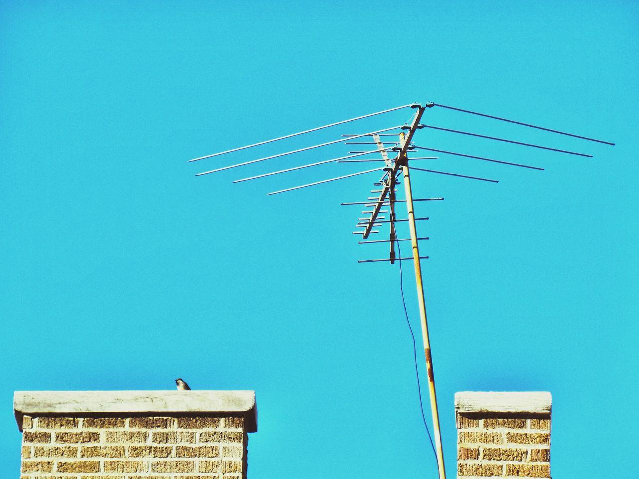 Satellite Antennas Bird New York Rooftop