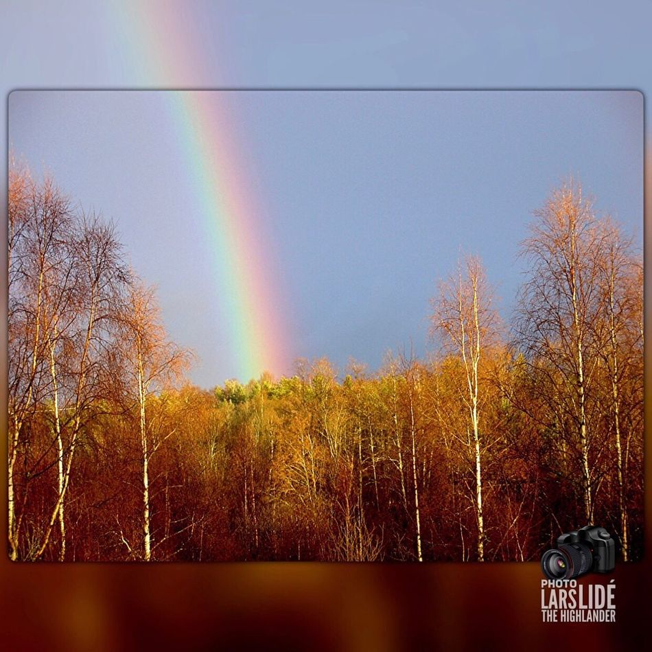Tree Rainbow Nature Sky No People Outdoors Multi Colored Beauty In Nature Taking Photos