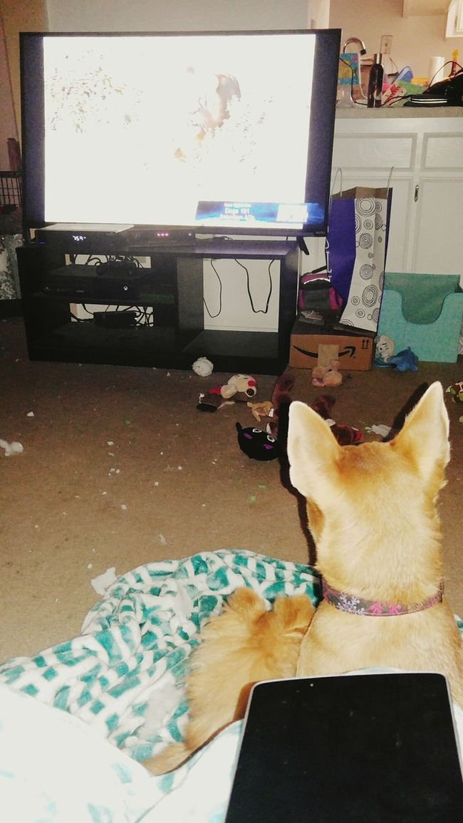 Puppylife Just Chillin' Theyliketvtoo PuppyLove Ignorethemess Funtimes Lovemydogs Viewfrommylap
