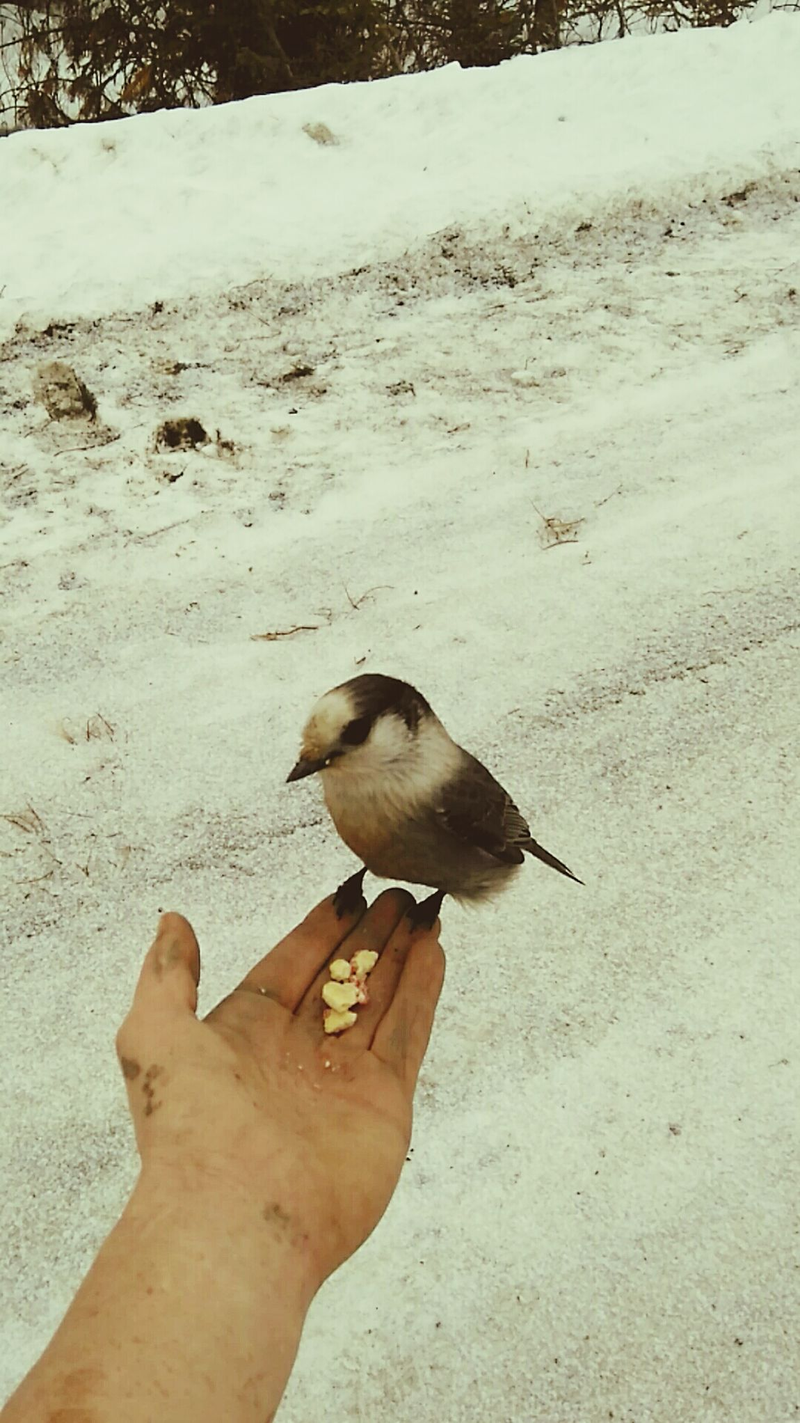 My new lil buddy........lets call him..... Winston lol Human Hand Animals In The Wild One Person Animal Wildlife Perching Close-up Nature Outdoors Real People New Friend ! The Great Outdoors Workplace Fun Nature's Diversities Check This Out Relaxation Enjoying The Moment Country Life Enjoying Life Healthy Living Taking Photos Peaceful Place Relaxing Beauty In Nature Knowledge From Experience All Natural