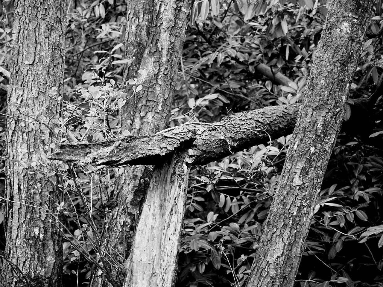 'Broken' Nature Outdoors No People Tree Trunk Day Tree Branch Black And White Devon Broken Long Goodbye