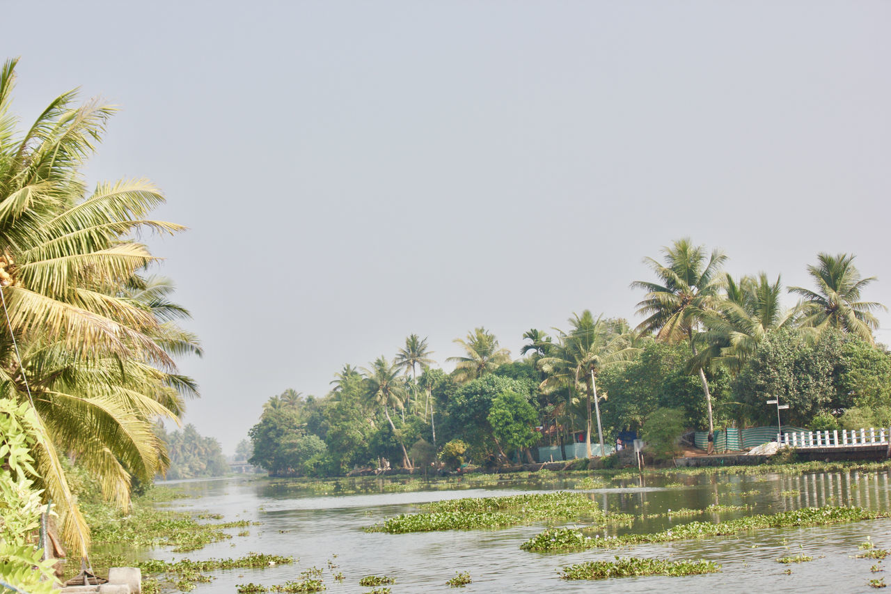 Beauty In Nature Boat Clear Sky Coconut Trees Green Green Color India Lake Lake View Lakeshore Landscape Natural Beauty Nature Palm Tree Plant Scenics Sky Tranquil Scene Tranquility Travel Destinations Tree Tropical Climate Water Water Reflections Waterfront