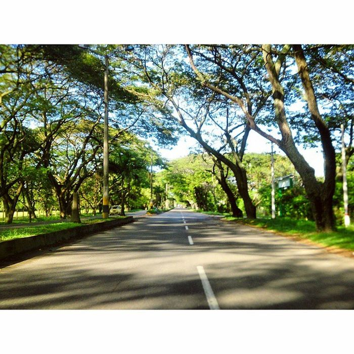 Espinal Tolima Green Carretera Way Tree Shadow Photography Travel Awesome Colombia Amazing Sony Xperia 🍀🌱🌿📷🌴🍃🌞🌳🌄