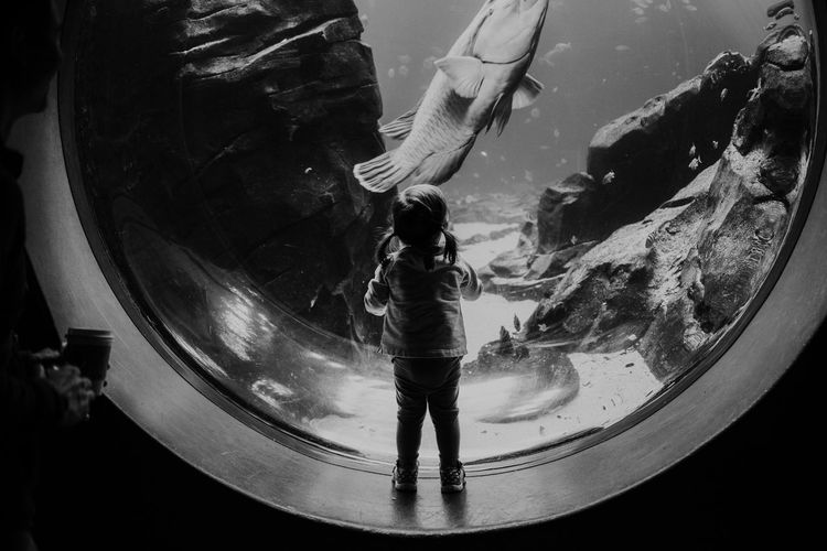 Little girl at the aquarium Circle Family Fun Silhouette The Week on EyeEm Whale Activity Aquarium Aquarium Life Aquarium Photography Aquatic Mammal Bestoftheday Black And White Blackandwhite Child Childhood Discovery Dolphin Explore Fish Girl Kid Learn Light And Shadow Water