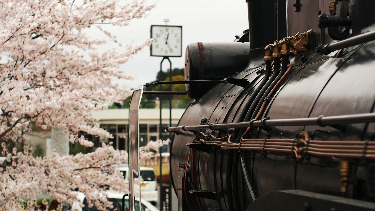 Beautiful stock photos of bahn, Cherry Blossom, Cherry Tree, Day, Flower