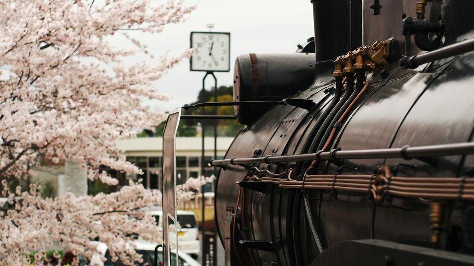 Beautiful stock photos of bahn, Cherry Blossom, Cherry Tree, Day, Flower