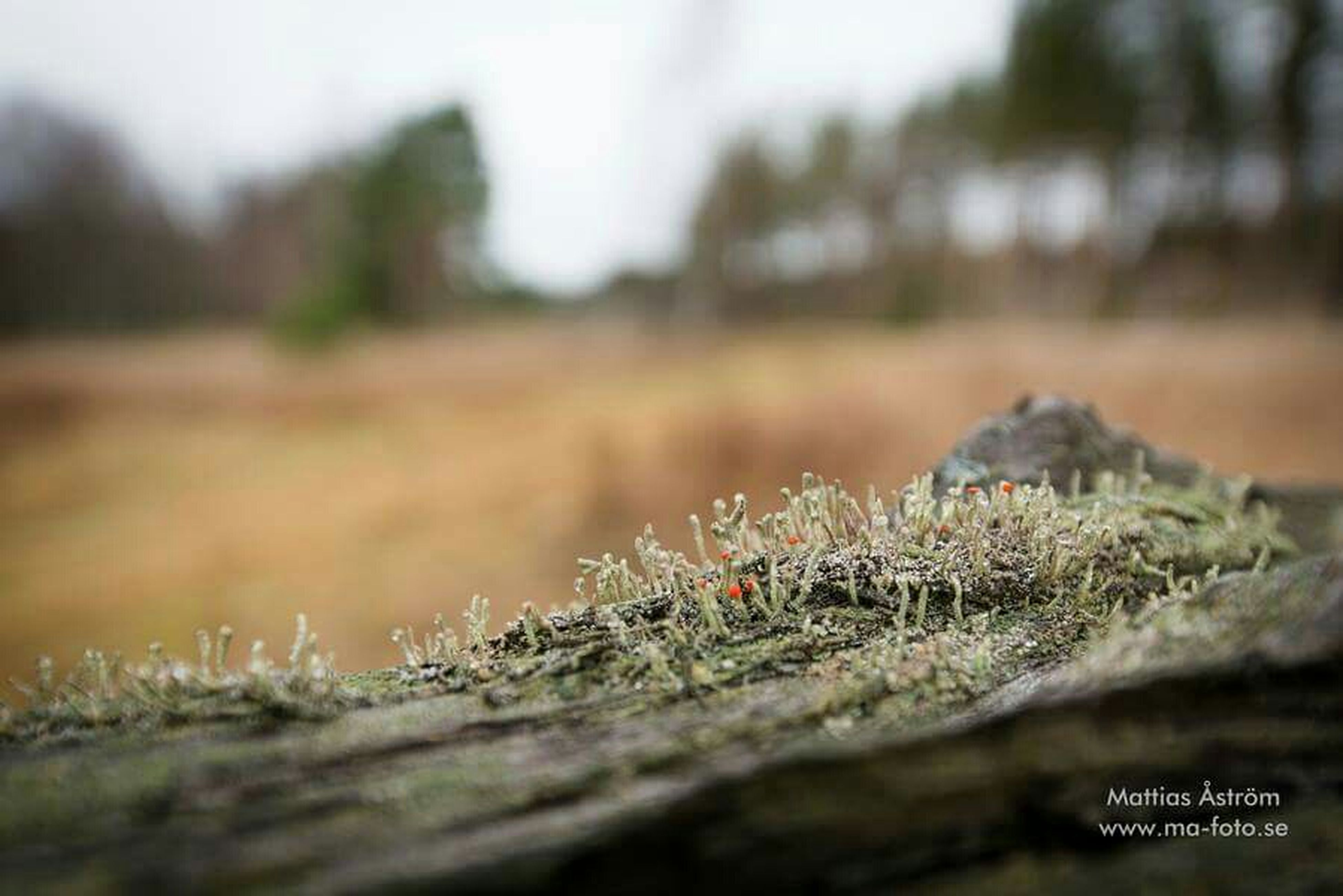 selective focus, focus on foreground, grass, close-up, field, nature, plant, growth, surface level, outdoors, day, landscape, tranquility, no people, tree, focus on background, beauty in nature, grassy, non-urban scene, growing