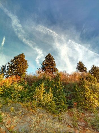 Trees growing up the side of a hill. Beauty In Nature Outdoors Nature Sky Cloud - Sky Trees Pine Trees Smokey Mountains, NC Water Rock Knob Fresh EyeEm Betterlandscapes Cell Phone Photography