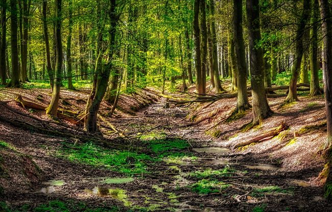 Forest HDR HDR Collection Wald Wildpark Mechernich Wildpark