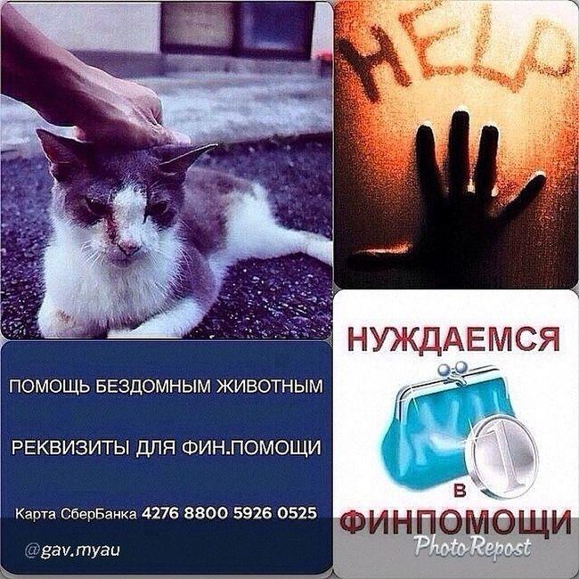 """By @gav.myau """"Объявляется сбор средств для этой кошечки. Проведен остеосинтез бедренной кости, зашит мочевой и стерилизация. В связи с экстренностью случая волонтер рассчиталась своими средствами. Помогите собрать финансовую помощь для кошки. Если у нас волонтеры будут сами за все расчитываться - мы пойдем по миру. Очень надеемся на вашу поддержку. Заранее большое спасибо! РЕКВИЗИТЫ ДЛЯ ФИН.ПОМОЩИ 💳 Карта СберБанка 4276 8800 5926 0525"""" via @PhotoRepost_app нужна_помощь подарите_мне_дом подари_мне_дом подарите_мне_шанс"""