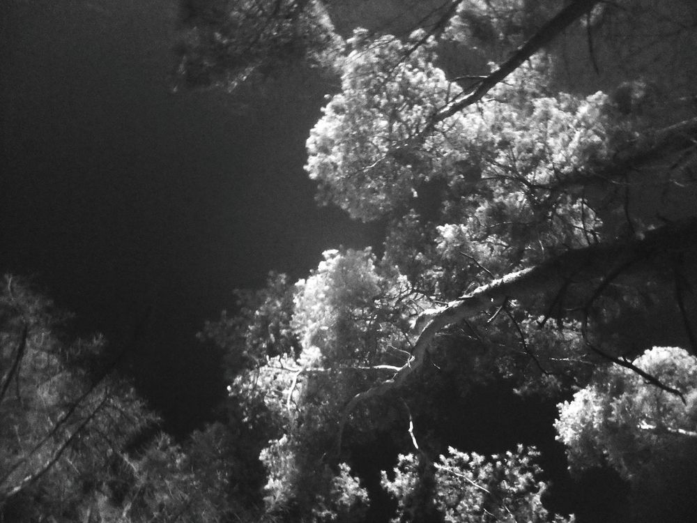 Tree Nature Growth Low Angle View Beauty In Nature Infraredphotography Infrared Photo Infrared Photography Infrared Black And White Photography Black And White Blackandwhite Blackandwhitephotography Blackandwhite Photography Nature Outdoors Tree Surreal Surreal Art