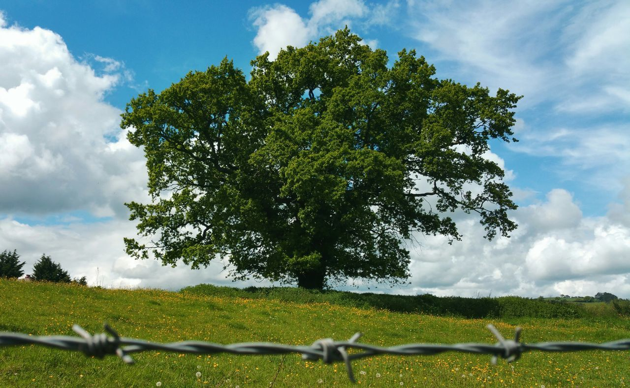 ... limited access ... Oak Trees Barbed Wire небо облака Landscape Wales Powys Sky Clouds Newtown Powys Primavera весна Природа Springtime Spring Trees Nature