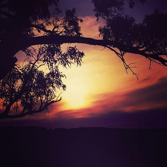 WesternAustralia Geraldton Skyline Sunset Natural Nofilter Beautiful Seeaustralia Seewa Beautiful Bright Colour Trees Sun Traveling Openroad Exploring Saturdaydrive