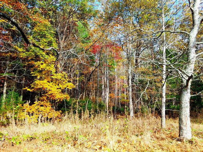 The Forest Nature Sky Outdoors Backgrounds Tree Simplicity Meditation Enjoying The Moment My Favorite Pastime Beauty In Nature Check This Out Still Life Photography Sunlight Autumn Tree Line B