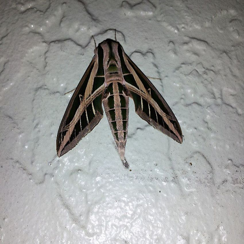 Got home and this was by my front door Gross Silenceofthelambs Floridabugs