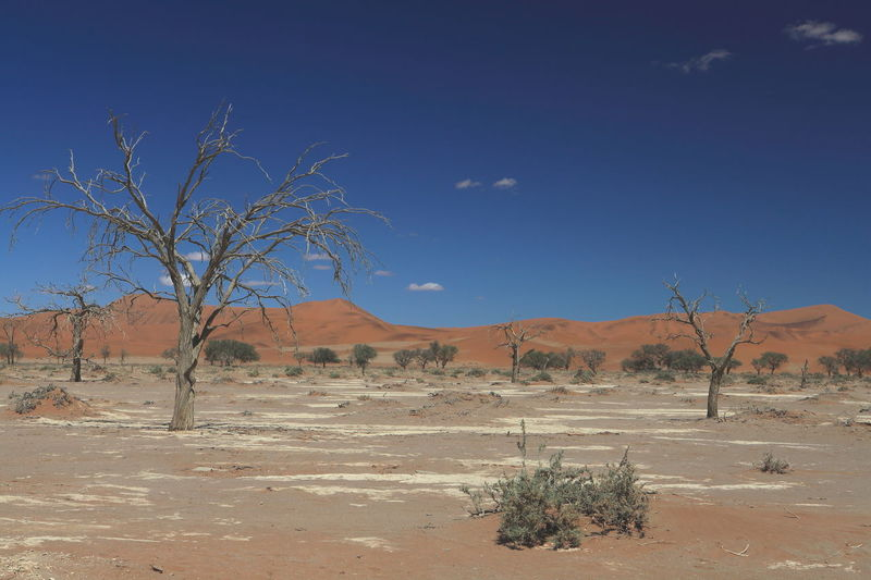 Namibia desert, Namibia Accidents And Disasters Africa Arid Climate Desert Heat - Temperature Landscape Namib Desert Namib Dunes Namib Naukluft National Park Namibia Sand Sand Dune Survival