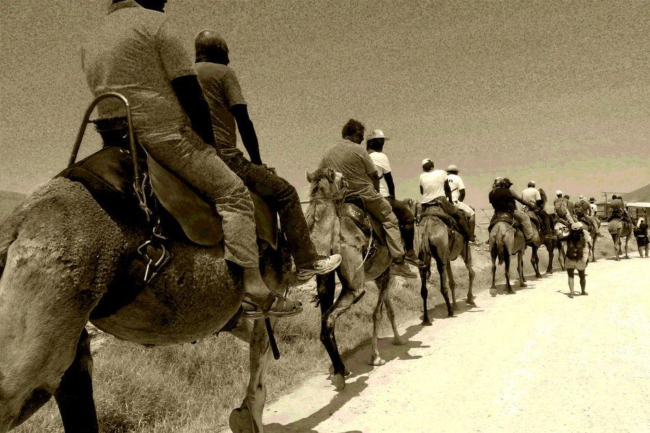 Arabic Camel Camel Caravan Camels Caravan Check This Out Desert Desert Beauty Deserts Around The World Domestic Animals Eye4photography  EyeEm Best Edits EyeEm Best Shots EyeEm Best Shots - Black + White EyeEm Gallery EyeEm Nature Lover EyeEmBestPics Eyeemphotography Eyemphotography My Point Of View Riding Riding A Camel Tadaa Community Taking Photos Tourism