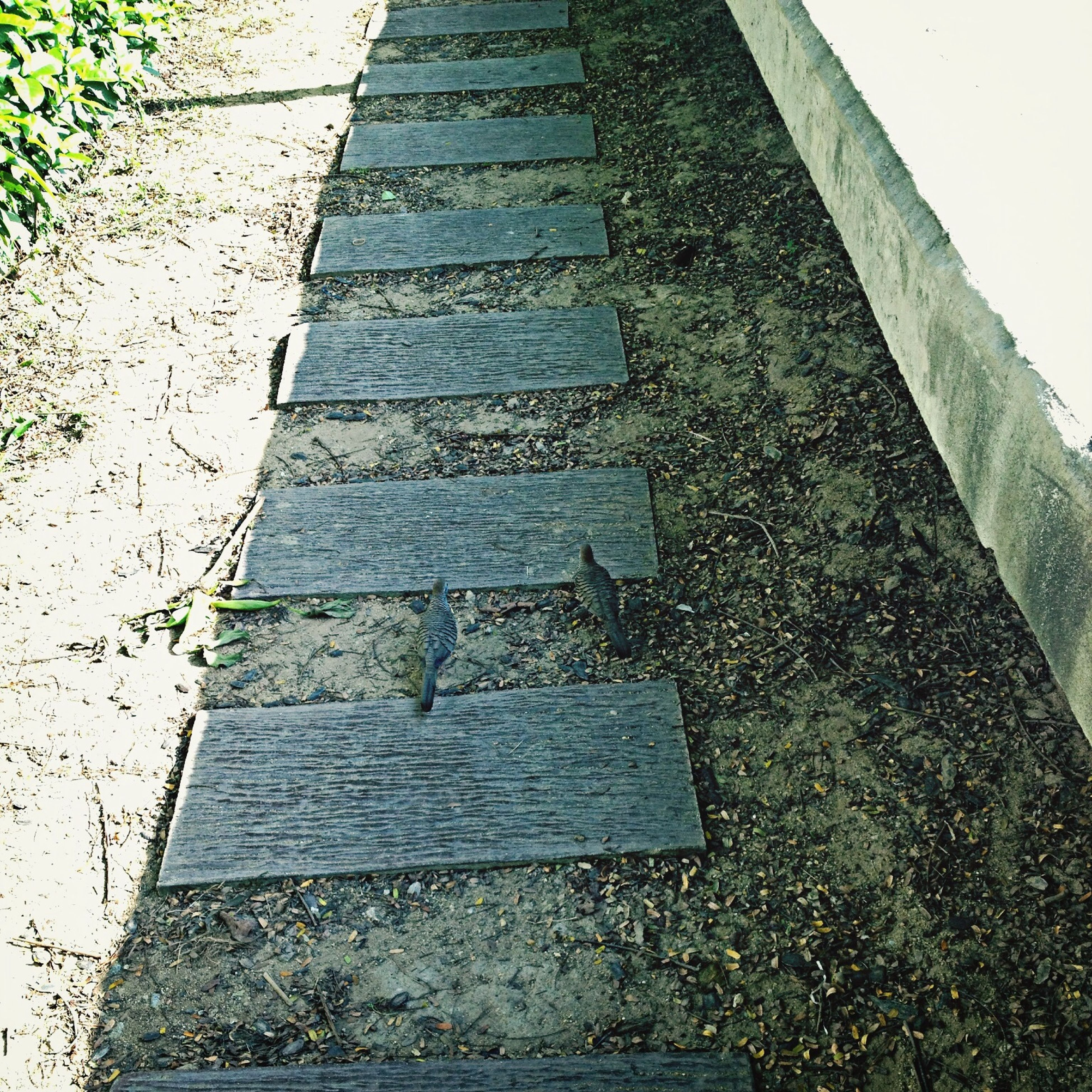 high angle view, the way forward, steps, day, outdoors, no people, steps and staircases, footpath, staircase, grass, sunlight, plant, diminishing perspective, nature, asphalt, street, paving stone, walkway, stairs, empty