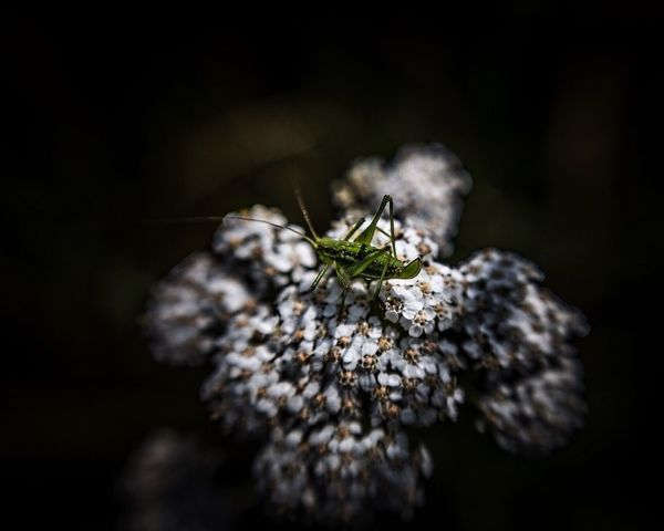 Lensbaby Photographie  Lensbaby Edge 50 Lensbabyedge50 Insects Beautiful Nature Macro_collection Nature_collection EyeEm Best Shots EyeEm Nature Lover Macro Insects