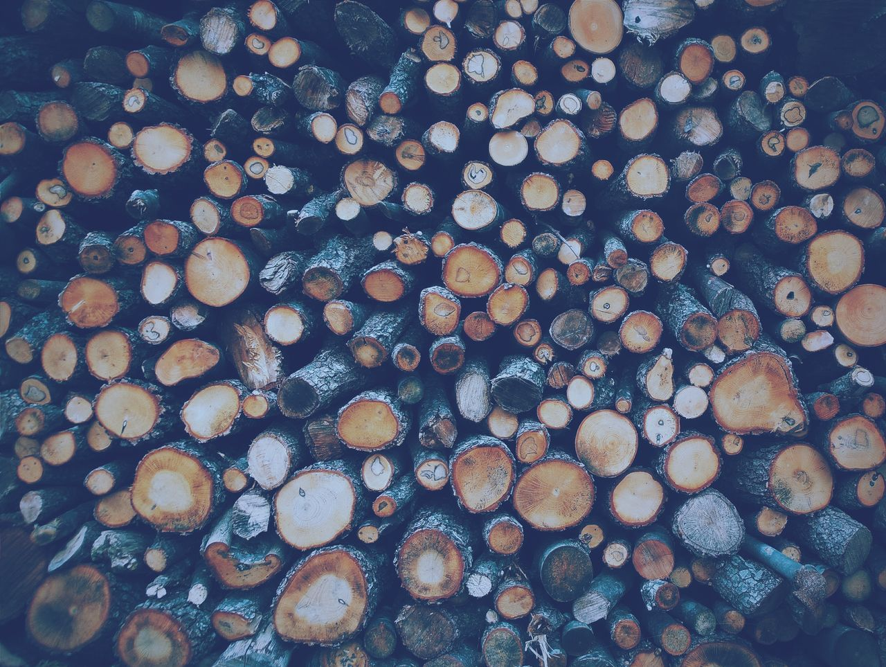 Beautiful stock photos of wood, Abundance, Backgrounds, Day, Deforestation