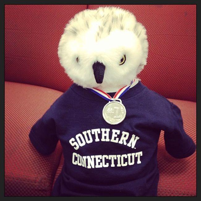 Owls Southernconnecticut Scsuapparel 1