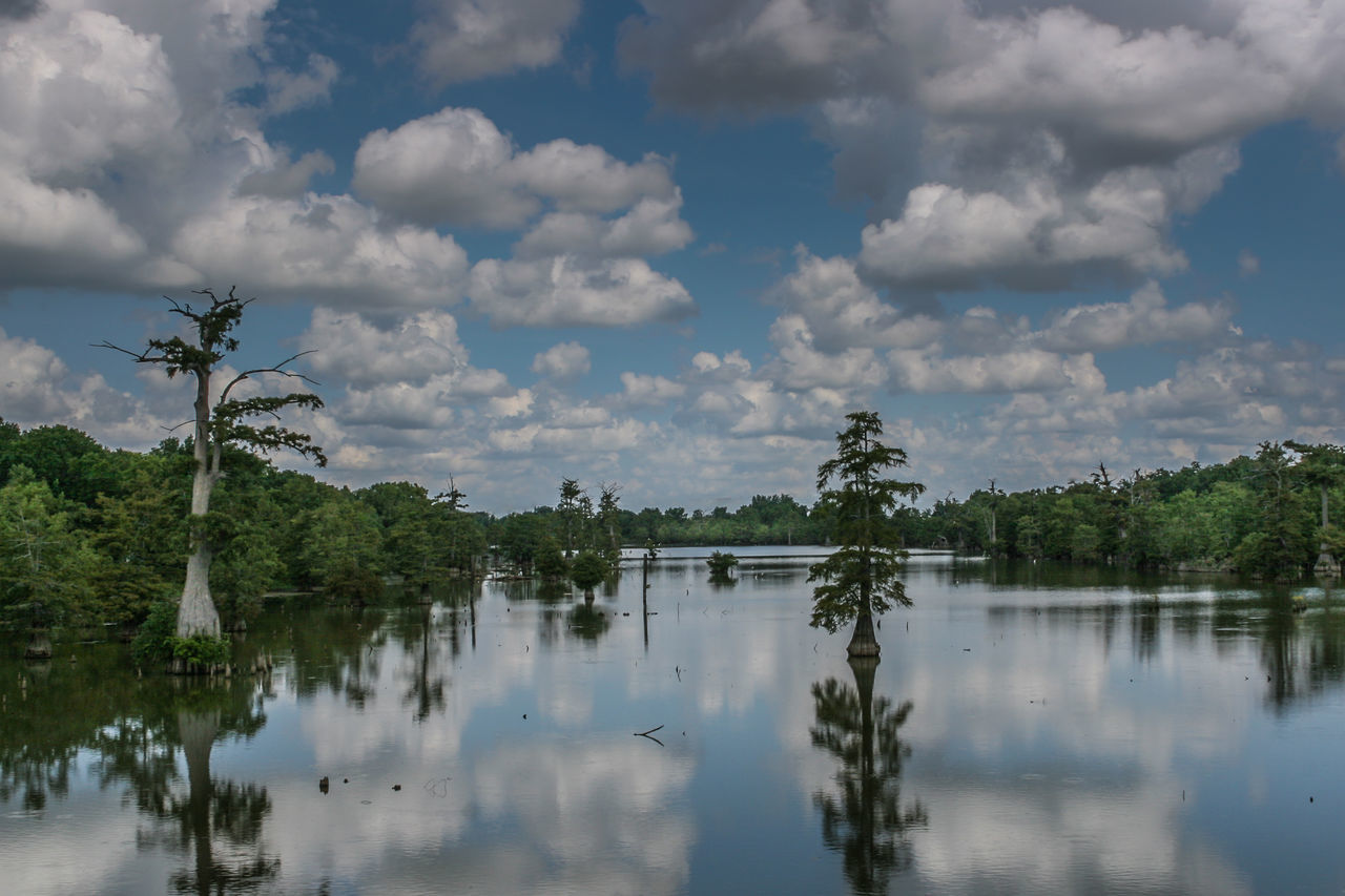 Cypress & clouds reflected Alabama Beauty In Nature Cloud - Sky Crypress Cypress Trees  Nature No People Perfect Summer Day Reflection River Reflections Sky Styx River Summer Views Tranquil Scene Tranquility Tree Waterfront