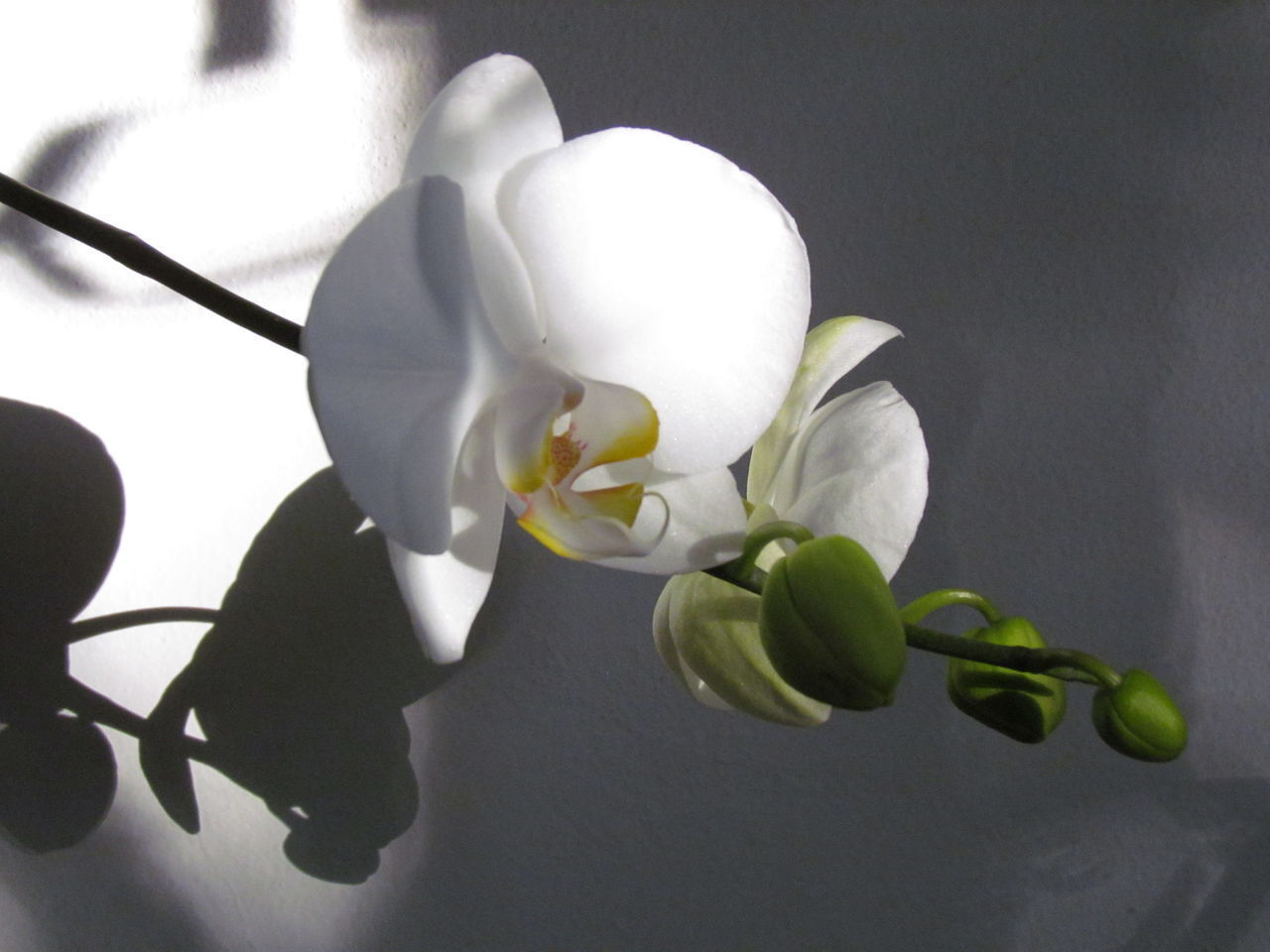 White Color Close-up Freshness Fragility Flower Beauty In Nature Growth Nature Plant Flower Head No People Day Outdoors EyeEm Gallery Nature_collection Orchids EyeEm Gallery Kikosene Orchids Collection Orchid Plant Petal Brazil Photography Beauty In Nature Eyeemphotography