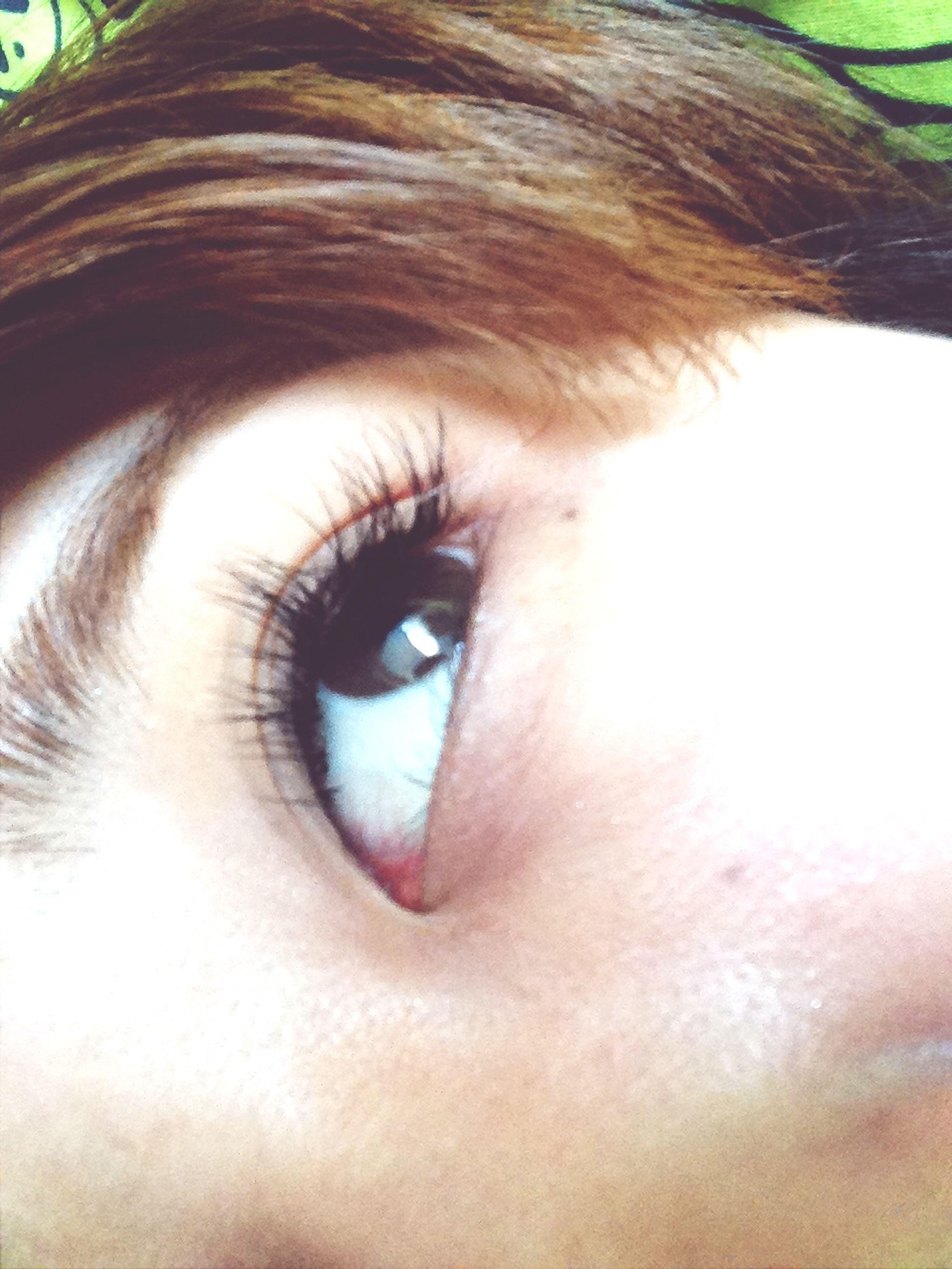 human eye, close-up, eyelash, part of, eyesight, sensory perception, extreme close-up, extreme close up, portrait, looking at camera, eyeball, animal eye, detail, iris - eye, animal body part, staring, human skin