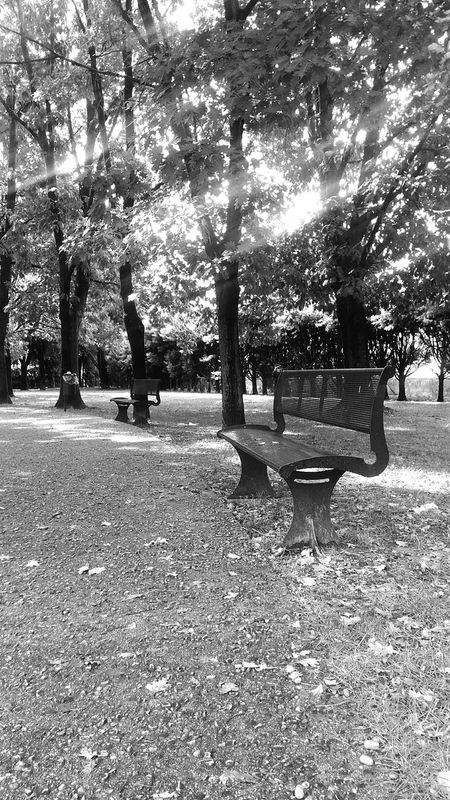 Park Chair Panchina Panchinavuota Blackandwhite Black And White Blackandwhite Photography Black And White Photography Blackandwhitephotography Black And White Collection  Black & White Nopeople Relax Quite Place Treescollection Treescape Trees Collection Trees Collection Trees Of Eyeem Biancoenero Bianco E Nero Bianconero Blackandwhitephoto Black&white Alberiovunque