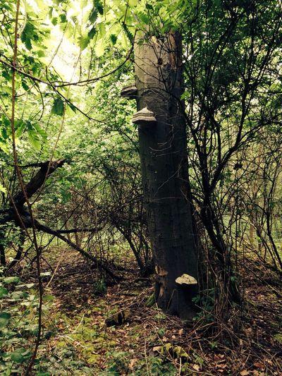 In the Woods Eyeem Natur Lover