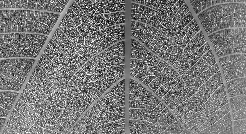 Black And White Portrait Leaves_collection Macro_collection Macro Nature_collection Naturelovers Taking Pictures Black And White Collection  Nature_perfection Blackandwhite Photography Black&white Blackwhite Blackandwhite Black And White Black & White FiftyShadesOfGrey 50shadesofgrey + Black - White Nature On Your Doorstep Black And White Photography Blackandwhitephotography Blacknwhite Black And White