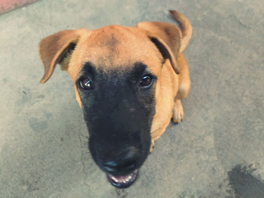 My dog, Coco 🐕 Pet Dogs EyeEmNewHere Eyeemphoto First Eyeem Photo Fresh On Eyeem  Animal Photography Animal Lover Companion Dog Pet Photography  Black Eyes