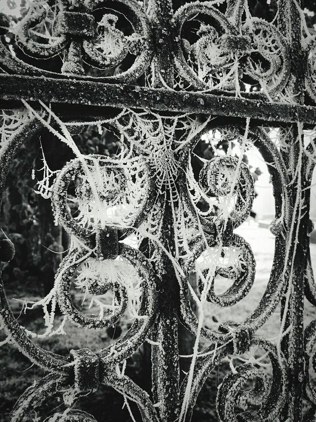 Winter Wintertime Gate Gate Detail Frozen Nature Frozen Frozen Cobweb Cobwebs Ice Icy Icy Cobweb Spider Web Icy Web