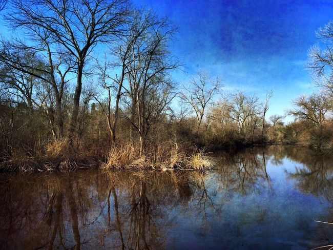 Day 2. The beauty of a winter day reflected in blue. Ifollowedtheyellowbrickroadtoday 365.2015
