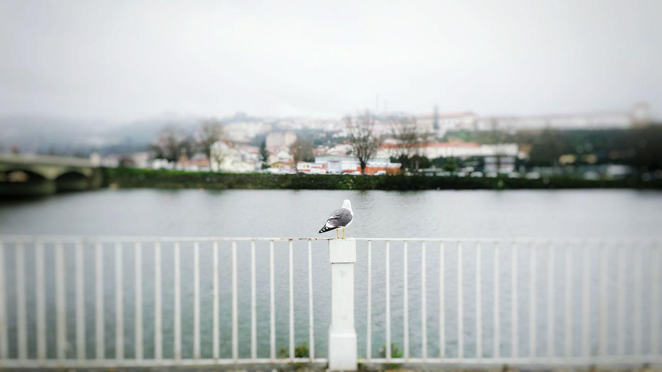 Mesmerized Birdwatch Coimbra Portugal Mesmerized View